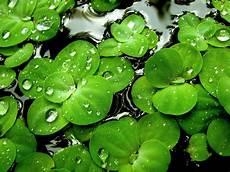 desktop green flower wallpaper flower wallpaper stunning green hd desktop wallpapers