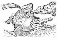 krokodil ausmalbilder ausmalbilder krokodil farm