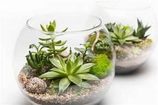 pianta grassa da interno lingua di suocera pianta grassa great polyscias