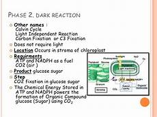 Does The Calvin Cycle Require Light Photosynthesis