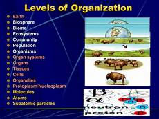 Levels Of Organization Ppt Science Hierarchy Powerpoint Presentation Id 5590412