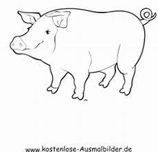Schwein Malvorlagen Bilder Ausmalbilder Schwein 2 Tiere Zum Ausmalen Malvorlagen