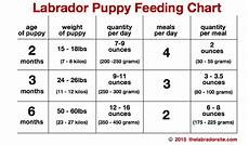 Puppy Food Chart By Age Feeding Your Labrador Puppy How Much Diet Charts And The