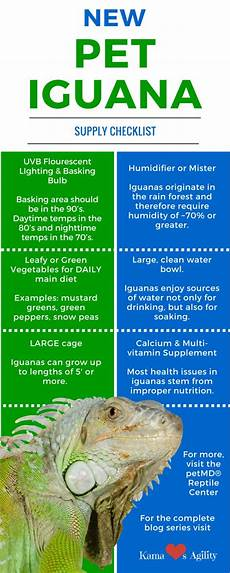 Iguana Food Chart Are You Ready To Own A Pet Iguana Reptilecare Petmd