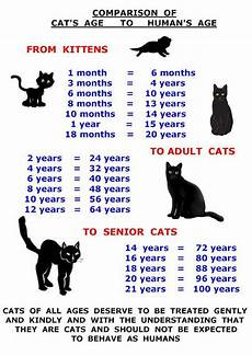 Baby Kitten Age Chart Kitten Age Teeth Google Search Cat Ages Cats Kittens