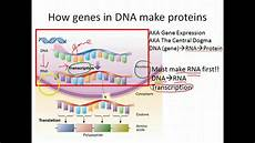 Transcription Biology Biology Gene Expression Transcription Youtube