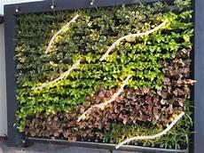 Vertical Green Vertical Green Wall Rs 850 Square Feet Royal Micro
