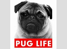 Pug Life T Shirt (Adult Unisex)   I Love Pugs