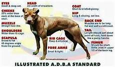 Bully Ear Crop Chart The Difference Between American Pit Bull Terrier And