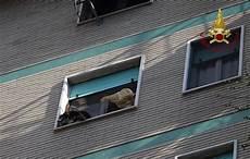 altezza davanzale finestra cagnolino sul davanzale a 20 metri di altezza salvato dai