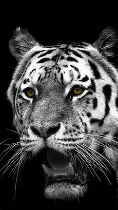 black and white tiger iphone wallpaper animal white tiger 750x1334 wallpaper id 301455