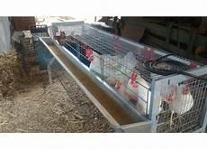 gabbia galline gabbia per 20 galline ovaiole a 4 fori 1 piano
