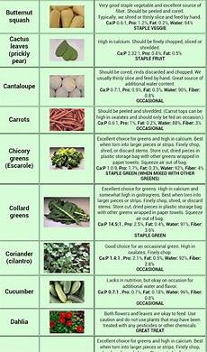 Iguana Food Chart 414 Best Images About Reptiles On Pinterest Python