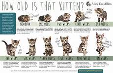 Baby Kitten Age Chart Have You Ever Wondered About Nine Lives Cat Sanctuary