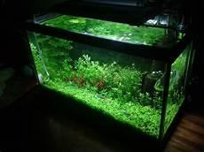 5 Gallon Tank Light My 5 Gallon Planted High Tech Cakeday Update X Post From