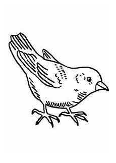 Malvorlagen Vogel Kostenlos Kleiner Vogel 3 Ausmalbild Malvorlage V 246 Gel