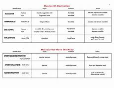 Muscle Action Chart Chart Of Muscle Origin Action