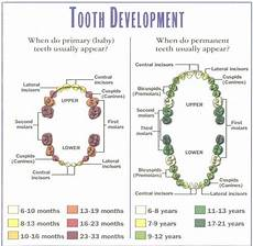 Deciduous Teeth Chart Tips For Taking Care Of Baby Teeth Cute Baby Blog