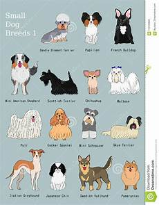 Dog Name Chart Group Of Small Dogs Breeds Hand Drawn Chart Stock Vector