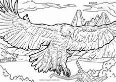 Malvorlagen Kinder Adler Malvorlage Adler Tiere Kostenlose Ausmalbilder