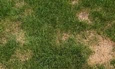 Brown Patch Grass How To To Get Rid Of Brown Patch Fungus On Grass