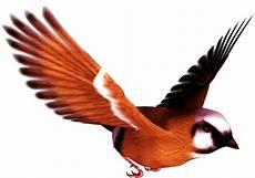 feather clipart lightweight feather lightweight