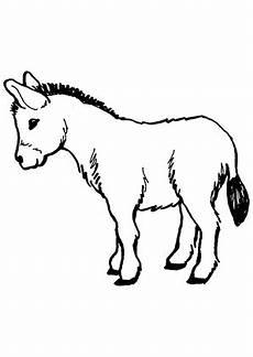 Malvorlage Esel Einfach Ausmalbild Junger Esel Zum Ausdrucken