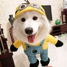 puppy coats minions 2016 pet clothes minions micky for dogs