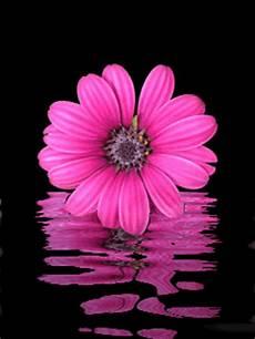 blumen malvorlagen jepang dian yang tak kunjung padam aneka animasi bunga