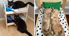 cat owners are turning ikea doll beds into adorable cat