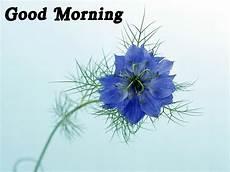 Flower Wallpaper Morning Hd day 2014 morning wallpaper