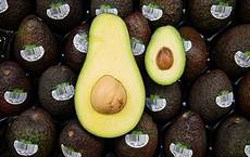 Different Types Of Avocado Asda Launches A Giant Avocado That S Cheaper Than Other