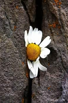 fiori tra l asfalto riflessi nel vento per fare tutto ci vuole un fiore