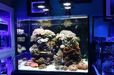 Saltwater Fish Tank Lights Starting Your First Saltwater Aquarium Here Are The Top 5