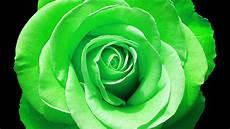 desktop green flower wallpaper green wallpapers pictures images