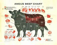 Beef Cuts Chart Poster Pin On To Learn