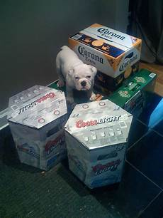 60 Cans Coors Light Finally Coors Light 55 Packs Now Available This Is From