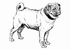 coloring page pug free printable coloring pages