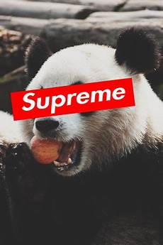 panda supreme wallpaper 273 best supreme wallpapers images on iphone