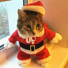 cat clothes for cat clothes costume clothes for cats new year