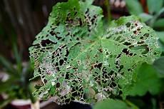 best money tips 10 organic solutions to garden pests