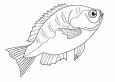 Fische Malvorlagen Zum Ausdrucken Comic Ausmalbilder Fische Kostenlos Ausdrucken Malvor