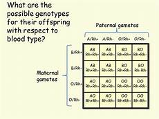 Genotype Chart For Blood Types Blood Type Genetics Presentation Biology