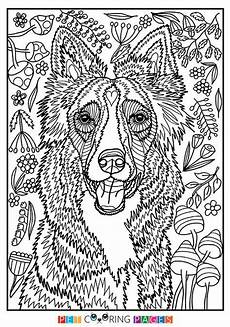 free printable border collie coloring page available for