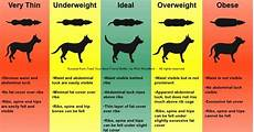Dog Weight Chart Calculator How Do I Measure Out Raw Food For Dogs And How Much Raw