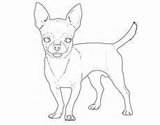 kostenlose malvorlage hunde chihuahua zum ausmalen