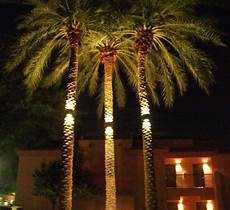 Light Up Palm Tree Palm Tree Light International