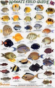 Reef Fish Identification Chart Hawaii Field Guides Reef Fish 1 Small Fish English