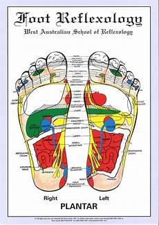 Foot Chart Wa School Of Reflexology Foot Chart A4 Size