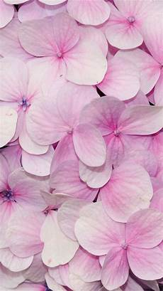 phone flower wallpaper apps 100 best iphone wallpaper images on